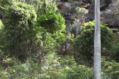 Ku-ring-gai Chase National Park bush walk (from Halls Wharf)