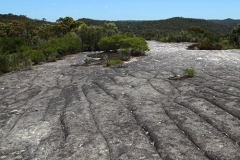 Aboriginal rock carvings on the Elvina Bay fire trail, Ku-ring-gai Chase National Park