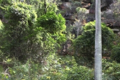 Ku-ring-gai Chase National Park bush walk (from Halls Wharf)