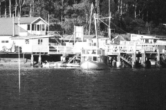 The Curlew at Church Point, 1969